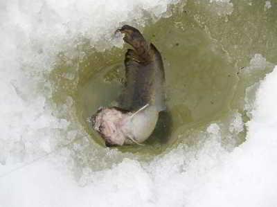 Рыбалка накануне весны