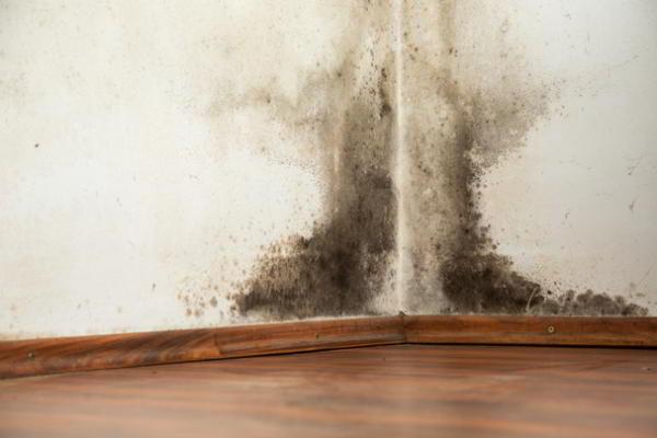 Как удалить плесень на стене в квартире своими руками