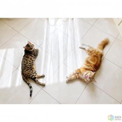Квартира для двух котов. Начало