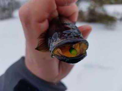 Зимний ротан. Интересная рыбалка.