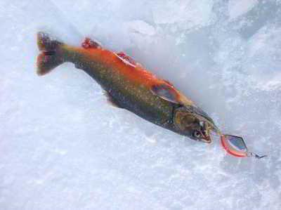 Опасное возвращение с рыбалки