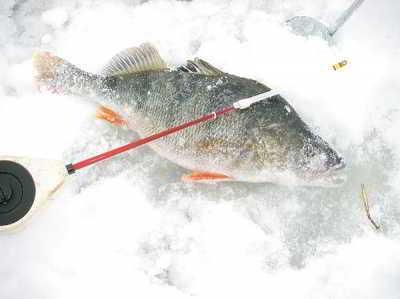 Весна и клев рыбы