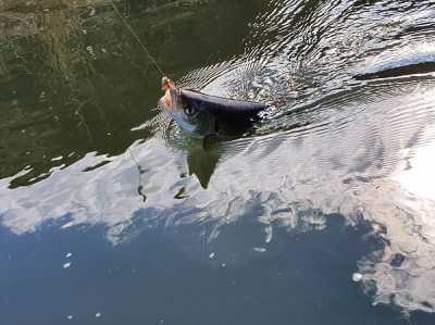 В Ростовской области начался сезон ловли голавля нахлыстом