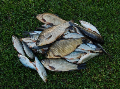 Самоизоляция на рыбалке – это классно