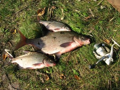 Фидерные наживки и насадки для ловли леща