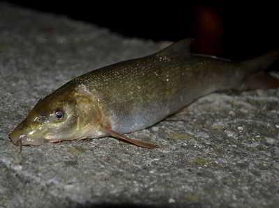 Самая крупная рыба ловится во сне